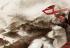 Ubisoft a lansat trilogia Assasins Creed Chronicles