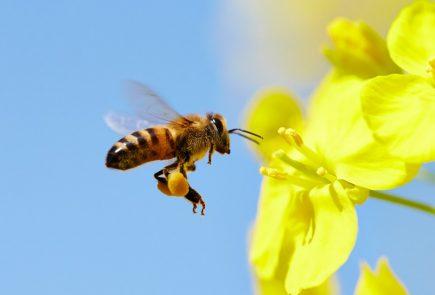 world bee